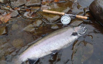 Steelhead Fishing New York's Salmon River